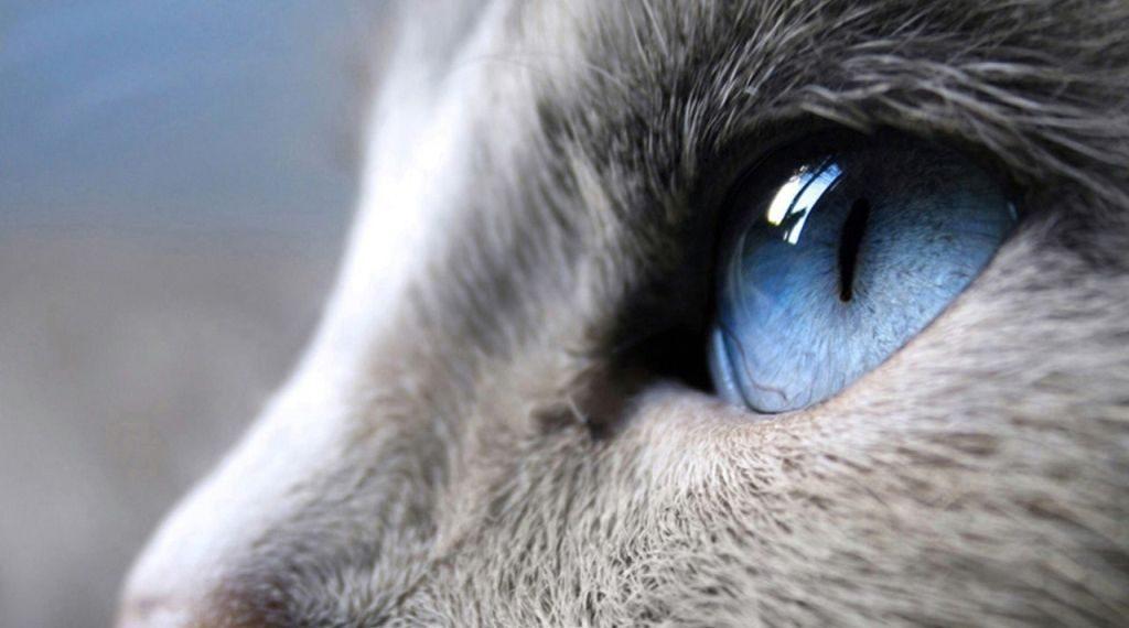 de-ce-au-pisicile-pupilele-verticale